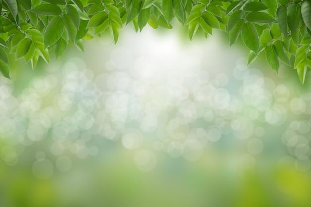 Zieleń liście w zamazanym i bokeh zaświecają tło