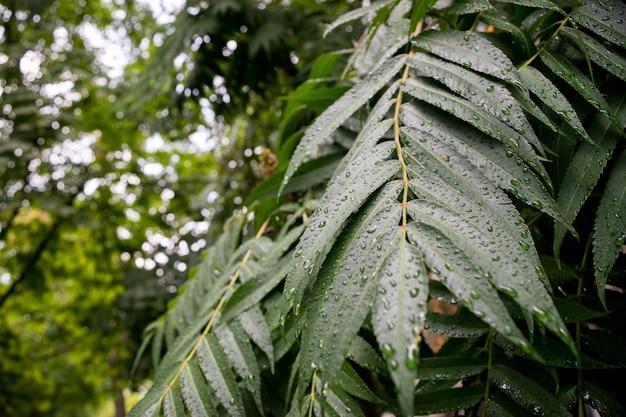Zieleń liście z wody kroplą na czarnym tle