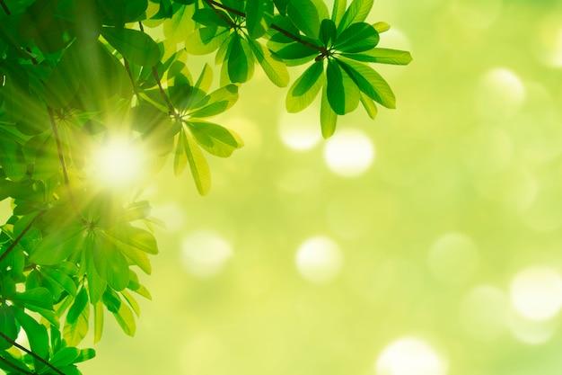 Zieleń opuszcza natury wiosny tło