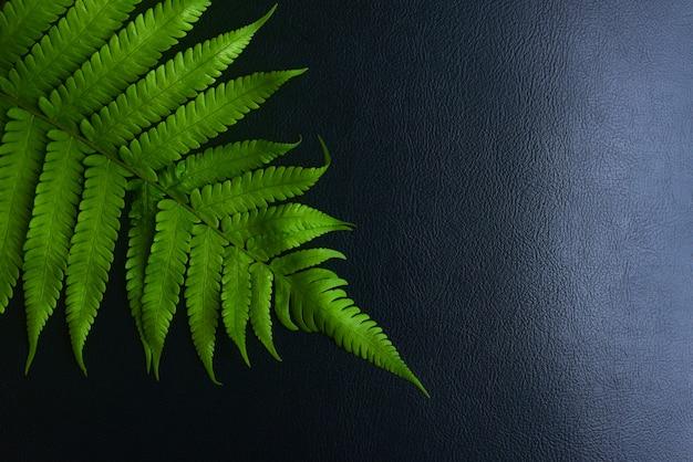 Zieleń opuszcza paprociowego tropikalnego tropikalnego lasu deszczowego ulistnienia rośliny na czarnym tle.
