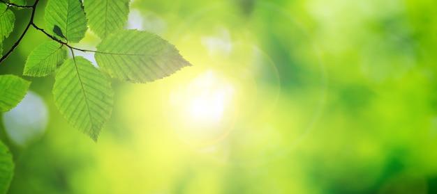 Zieleń opuszcza tło w słonecznym dniu