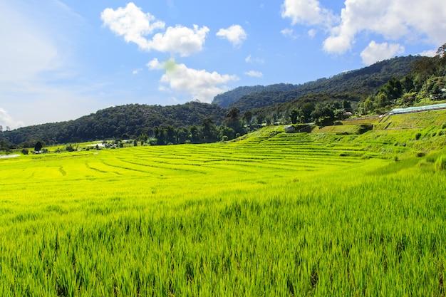 Zieleń tarasował ryżu pole w mae klang luang, mae chaem, chiang mai, tajlandia