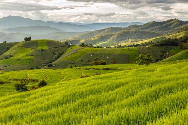 Zieleń tarasujący rice pole w pa pong pieng, mae chaem, chiang mai, tajlandia