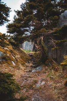 Zieleni drzewa blisko siwieją rockową górę podczas dnia