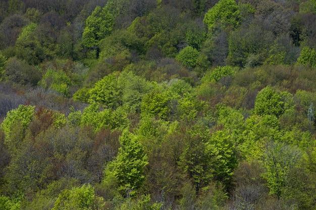 Zieleni drzewa w górach w jesieni
