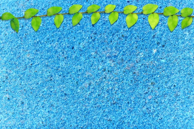 Zieleni liście meksykańskiej stokrotki natury granicy błękitnego lastryko podłoga