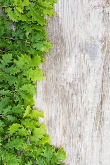Zieleni świezi żołądź liście na drewnianym stole