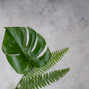Zieleni tropikalni liście na białym tle. płaski układ, widok z góry. makieta grafika z miejsca na kopię.