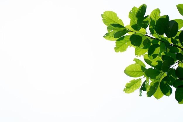 Zieleni tropikalni liście nad jaskrawym tłem