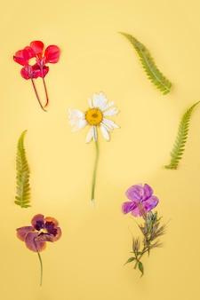 Zielnik różnorodnych suszonych roślin prasowanych na żółtym tle. botaniczny zestaw dzikich kwiatów, ziół. płaska świecka kompozycja jesienna, tło kwiatowe