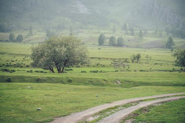 Zielona alpejska sceneria z polną drogą w pobliżu pięknej wierzby wśród roślinności z widokiem na wysoką ścianę górską z drzewami. vintage górski krajobraz z wierzbą we mgle na tle zbocza góry