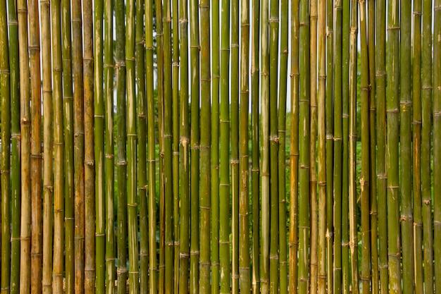 Zielona bambusowa ściana