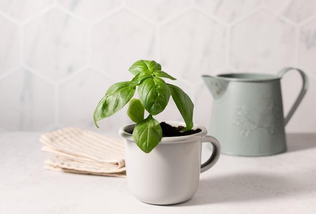 Zielona bazylia w metalowym kubku i zabytkowej kanistrze ekologiczny styl życia