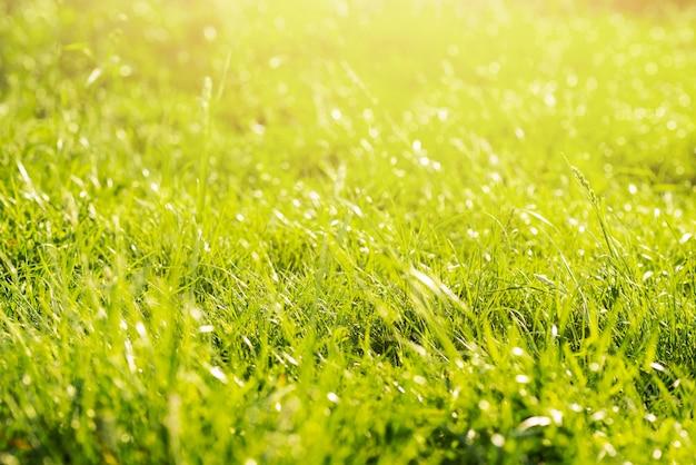 Zielona bujna dzika łąka w lesie