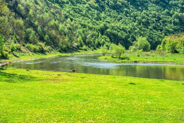 Zielona dolina rzeczna porośnięta trawą i lasem na brzegach