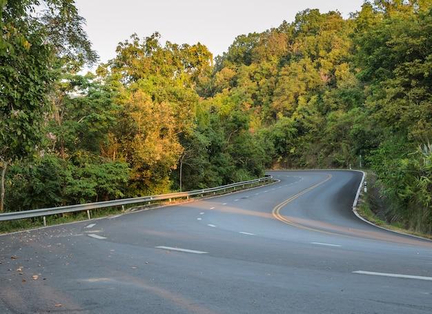 Zielona droga krzywej lasu