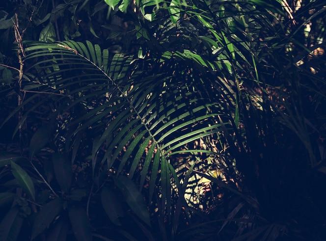 Zielona dżungla lasu z liści palmowych