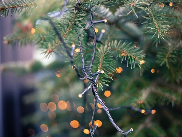 Zielona gałąź choinki jest na rozmytym tle świątecznego światła. jodła boże narodzenie koncepcja w tle miasta