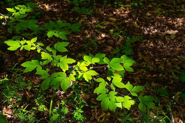 Zielona gałąź drzewa bukowego