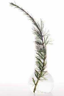 Zielona gałąź drzewa w kolbie z wodą na białym tle