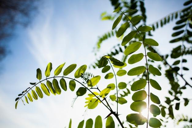 Zielona gałąź na piękny dzień ze słońcem