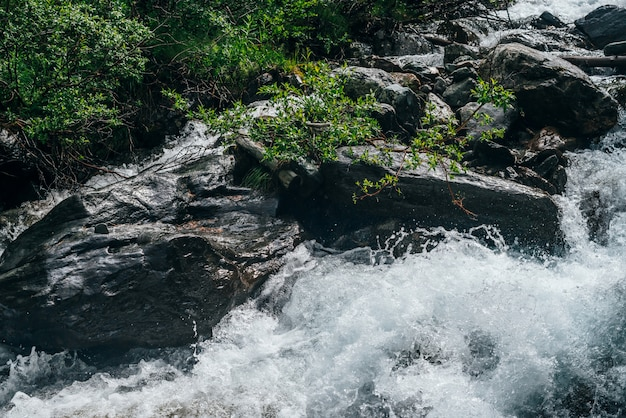 Zielona gałąź nad wodnym riffle halna rzeka