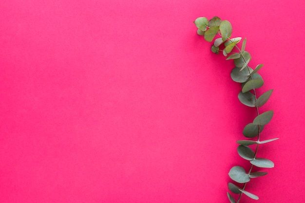 Zielona gałązka liści na różowym tle