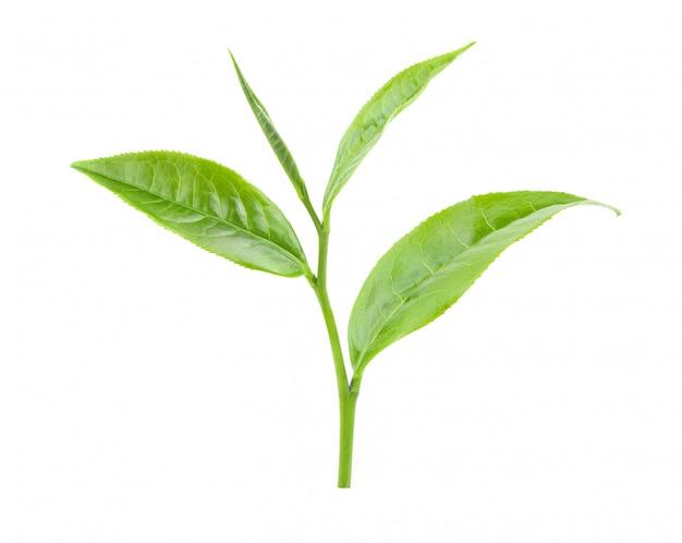 Zielona herbata liść na bielu