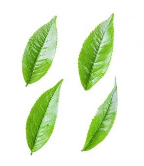 Zielona herbata liście na biel ścianie
