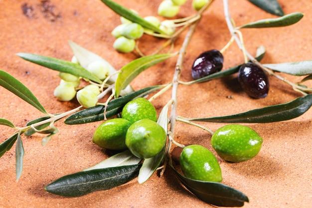 Zielona i czarna gałązka oliwna