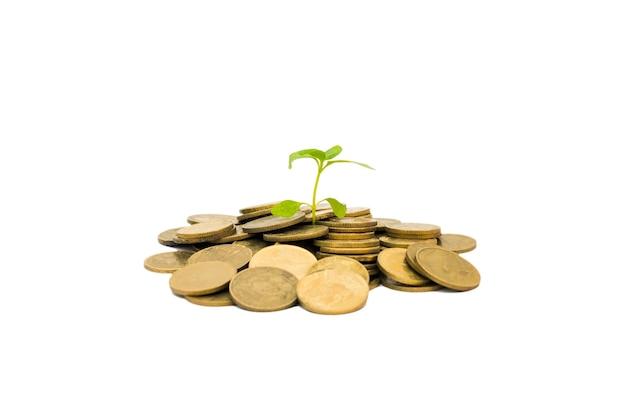 Zielona kiełka rośnie na stos złotych monet na białym tle