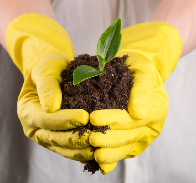 Zielona kiełkować w glebie