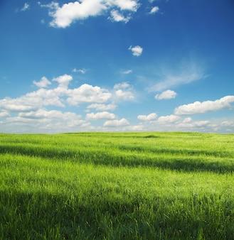 Zielona łąka i białe chmury