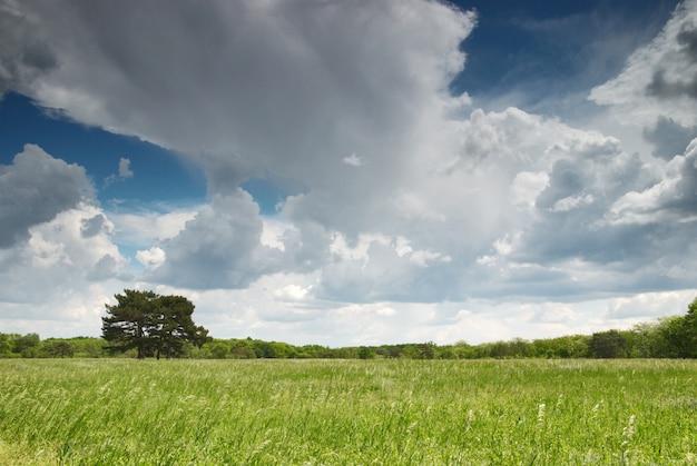 Zielona łąka i błękitne niebo z samotnym drzewem i lasem