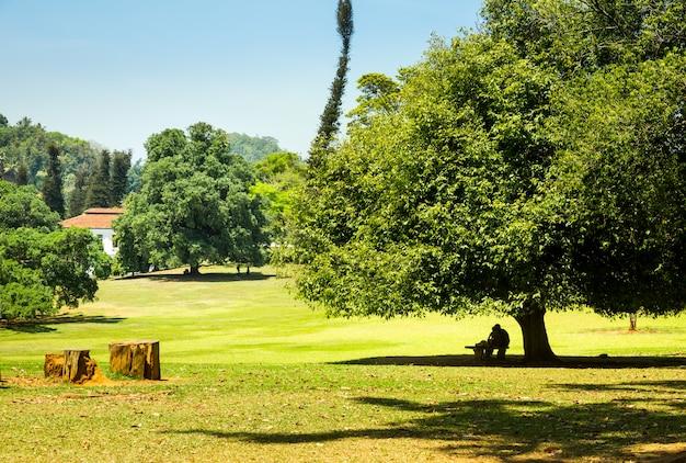 Zielona łąka i przyroda w miejscowości na sri lance. krajobraz cejlonu