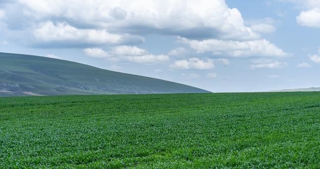 Zielona łąka na tle nieba