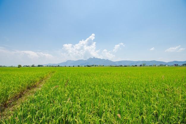 Zielona łąka niebieska trawa na farmie niebo chmury pochmurne tło