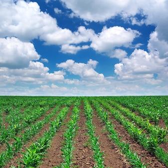 Zielona łąka rzędów