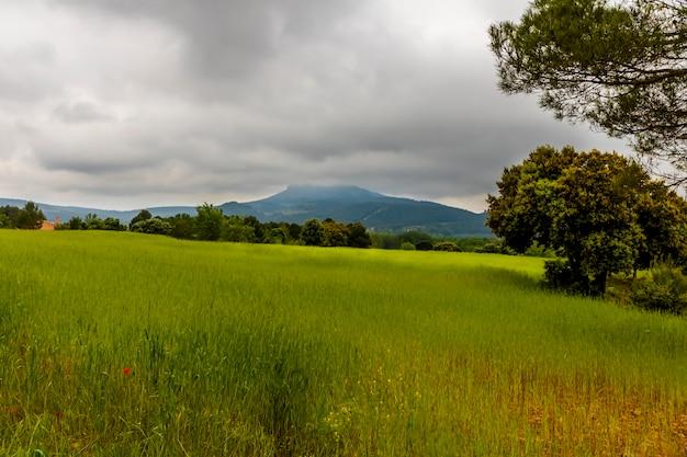 Zielona łąka z górami i sosnami w dzień z szarymi chmurami.