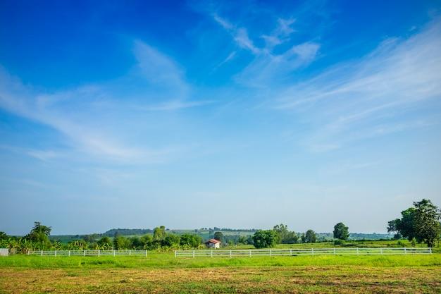 Zielona łąka z niebieskim niebem natury tłem.