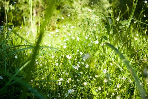 Zielona łąka z polnymi kwiatami. tło.