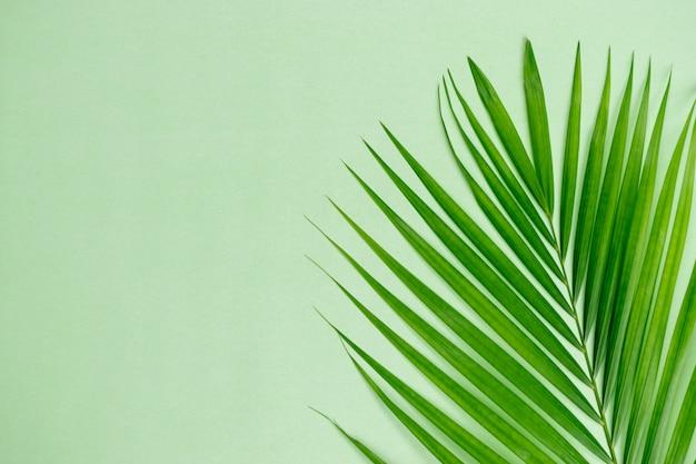 Zielona liść palma na pastelowej zieleni z copyspace