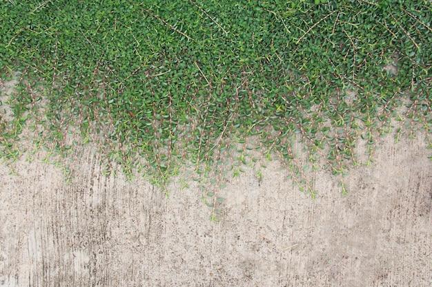 Zielona liść roślina nad grunge ściany tłem.