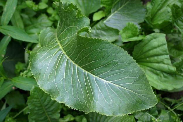 Zielona liść tekstura
