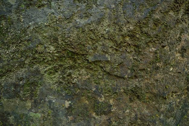 Zielona mech tekstura