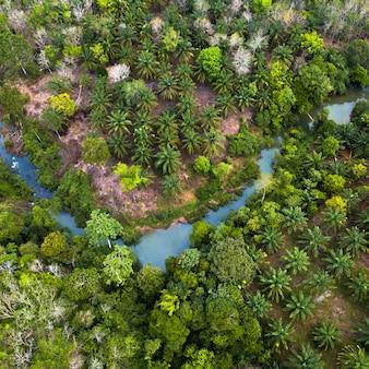 Zielona, naturalna sceneria w zielonych lasach sumatry w indonezji i na świeżym powietrzu