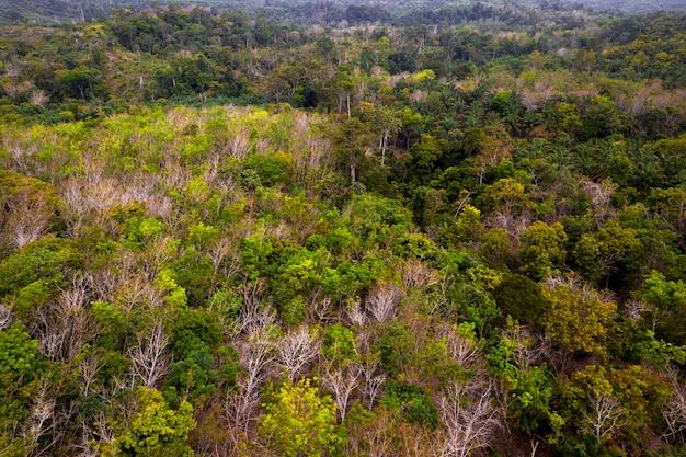 Zielona naturalna sceneria w zielonym i świeżym indonezyjskim lesie sumatrzańskim