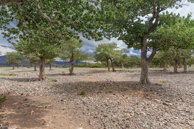 Zielona oaza wyrastająca ze skalistej gleby gór ałtaju mongolii
