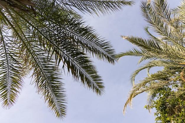 Zielona palma i błękitne niebo w tle