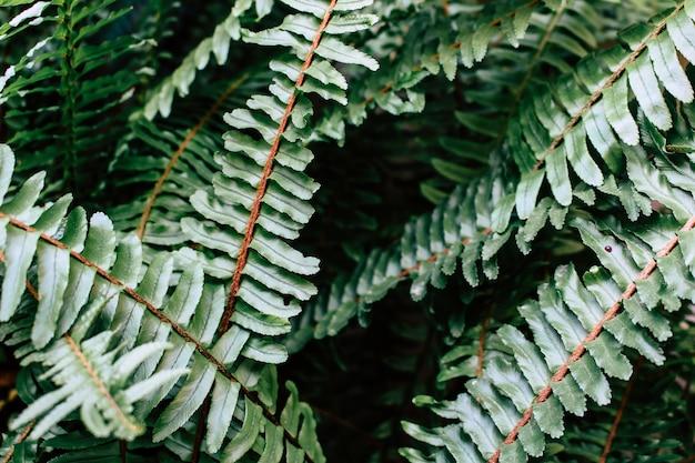 Zielona paproć opuszcza lasowego tło